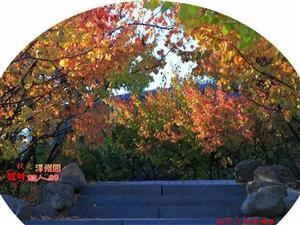 秋染泽州园红叶惹人醉