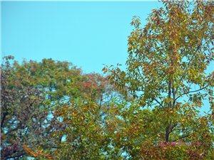 沂蒙最美是秋天