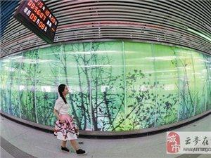 地铁3号线四新大道站清新亮相 绿野仙踪移步换景