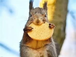 今朝有食今朝吃,明日更肥明日�n。