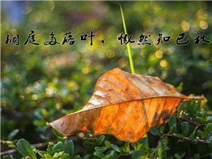 【初秋印象】黄岗山公园一角