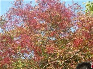 10月24日坡峰岭登山赏红叶活动展映