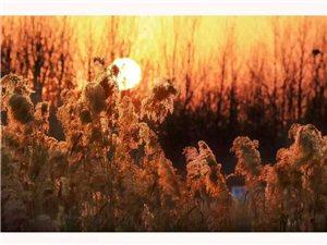 潘子丰摄影欣赏《涡阳湿地》
