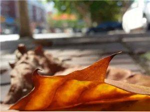 大莱阳的秋天,美呆了....快来感受下..