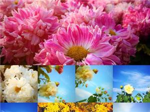 百花园,那些花儿