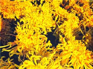 百花�@,那些花��