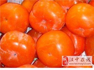 汉中宁强初冬柿子红