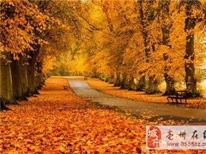 秋天的美景给你不一样的心情!