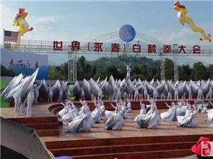 世界(永春)白鹤拳开幕式举行,永春网带你看现场