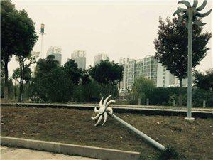文化广场河东侧路灯倒地