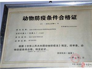 博研梅花鹿养殖基地为张家川人杀出一条血路,让您的梦想不再是梦想!