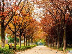 秋天天的颜色