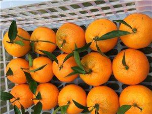 橘子甜了好安逸!