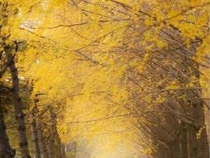 爱在深秋、缘聚康城