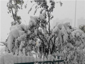 2015年的金乡县大雪纷纷