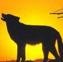 最优秀的团队是狼群吗?