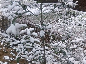 初冬白雪,魅惑无限……