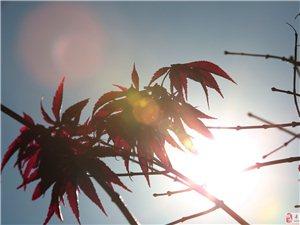 黄岗山公园【入冬景致】光影赏红叶