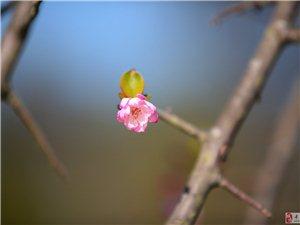 黄岗山公园【花色与竹影】