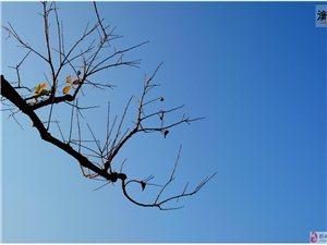 深山老树焕新芽