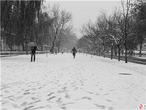 2015的雪
