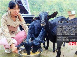 """泸州90后""""羊倌女""""的创业记"""