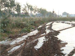 农民土地招人破坏,各部门互相包庇不执法