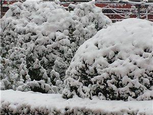 二零一五年首雪