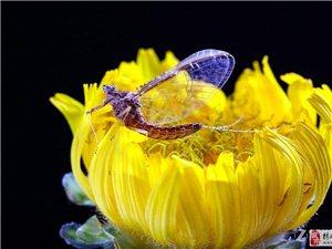 昆虫的世界