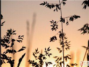 花树有世界,人生皆禅意