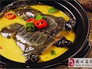 鱼米水乡特色白荡漾生态甲鱼!