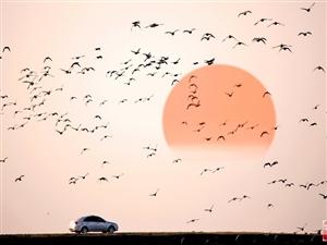 大美汉寿(九)候鸟天堂