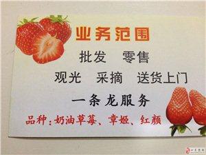 小饿小困,来点金凤草莓