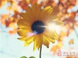 【美文欣赏】带上自己的阳光