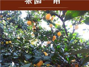 本人家有5千斤橙子,都是好品种,个大很甜