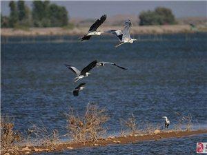 甘肃张掖黑河湿地国家级自然保护区