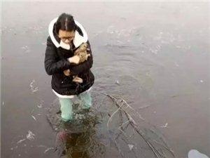 点赞!野兔踩破冰湖,山东一大二社工女生跳湖相救