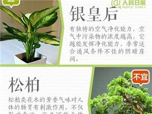不是所有绿植都适合养在室内,看看你家有这些植物吗?