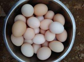 出售 柴鸡蛋
