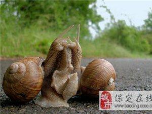 【自然探秘】不用啪啪啪!蜗牛麻麻照样能产卵,爆裂度吓死宝宝。