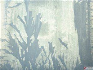寂静山谷草木深