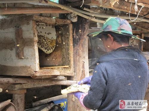 您知道为什么家中要常备一瓶蜂蜜吗?史上最全蜂蜜用法!