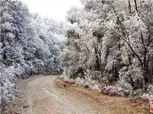 百年一遇,茂名也下雪了,值得一看・