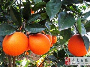 【原创】寻乌橙(新韵)