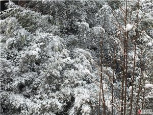 2016――富�-雪