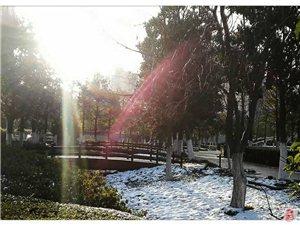 微友诗一首:《雪地晨光》