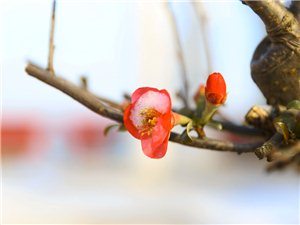 小年时分的花