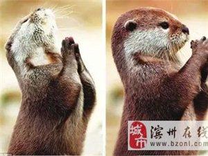 """新年愿望""""猴""""出来!"""