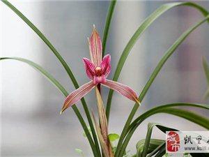 贵阳兰花博览会开展 几十种名贵春兰争奇斗艳