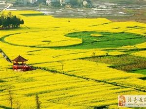 2016重庆潼南油菜花节即将开幕!亲。你们准备好来了吗?